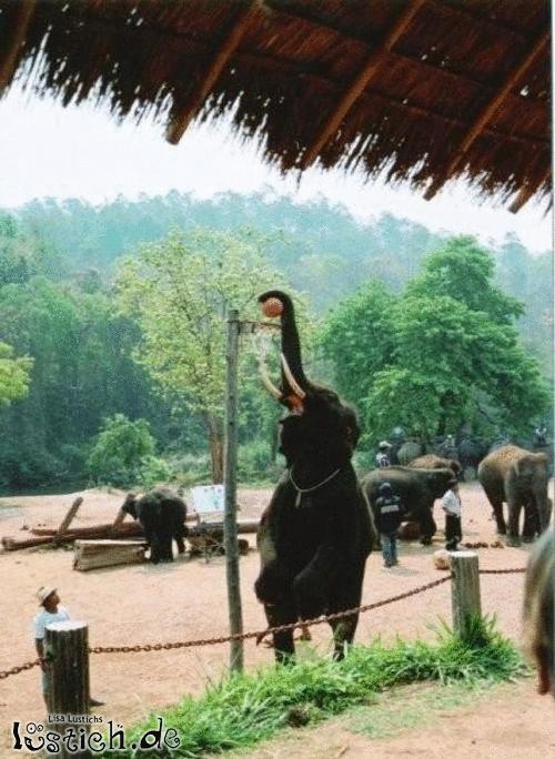 Sportlicher Elefant