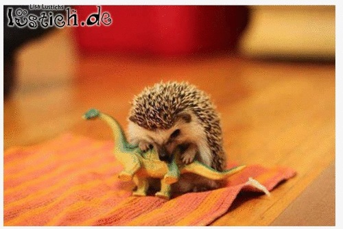 Wie die Dinos ausstarben