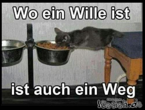Wenn Kätzchen Hunger hat