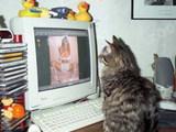 Katze guckt Porno