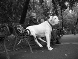 Hund macht Pause