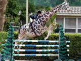 Giraffensprung