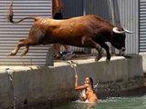 Stier springt ins Wasser