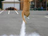 Raketenkatze