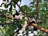 Katze schläft im Baum