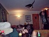 Katze kann fliegen