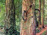 Fahrrad im Baum