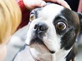 Hund mit großen Augen