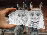 Coole Lamas