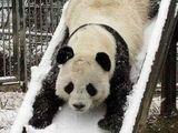 Panda-Rutsche