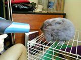 Kaninchen-Fön