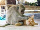 Affe und Katze