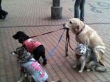 Hund als Herrchen
