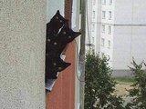 Vier schwarze Katzen