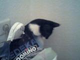 Katze muss ganz dringend