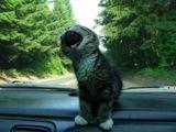Katze mag keine Autofahrten