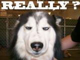 Really dog