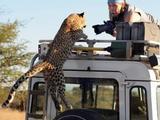 Gepard wehrt sich