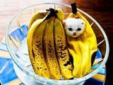 Bananenkatze
