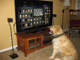 Hund vor dem Fernseher gesetzt