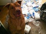 Neue Packung Toilettenpapier