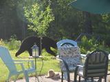 Ein Bär im Garten