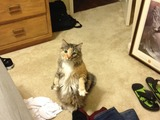 Wo ist mein Essen?