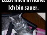 Bockige Katze