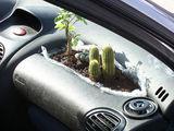 Autopflanzen
