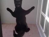 Ausgesperrte Katze