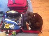 Lebendiges Gepäck
