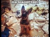 Süßer Schäferhund