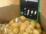 Neue Sorte Honigmelone