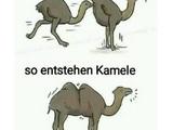 Wie Kamele entstehen