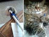 Ich brauche den Stift!
