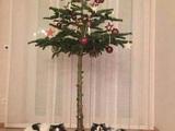 Katzengerechter Weihnachtsbaum