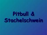 Pitbull & Stachelschwein