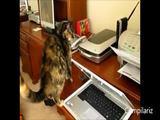 Katzen und Drucker