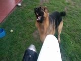Angriffslustiger Hund