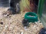 Sportlicher Hamster
