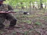 Mutiges Eichhörnchen