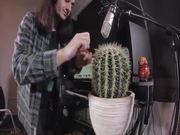 Kaktus Beats