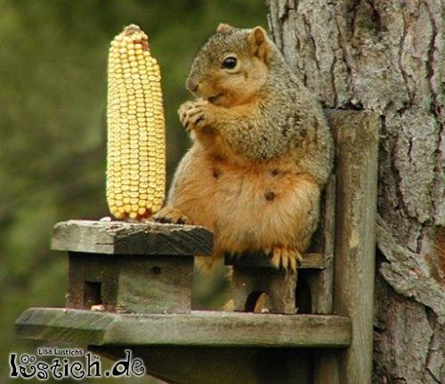 Eichhörnchen macht Picknick
