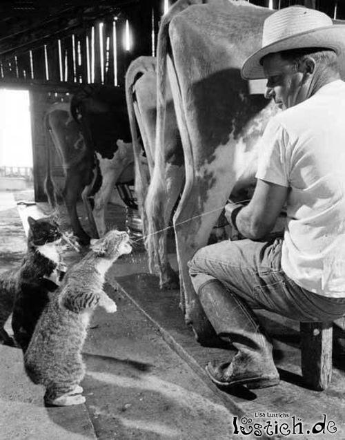 Die Milch machts