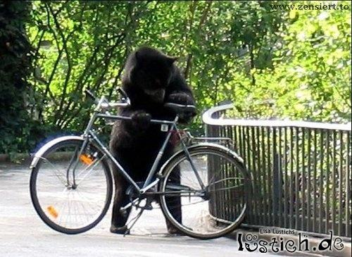 Bär fährt Fahrrad
