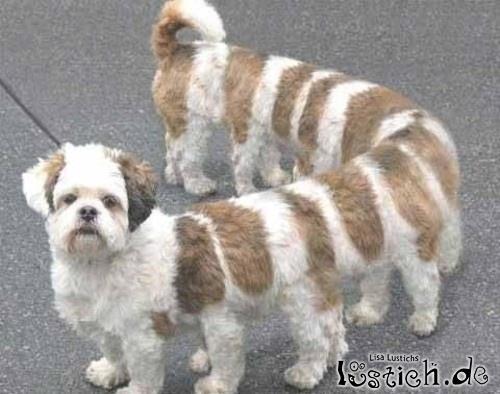 Stretch Hund