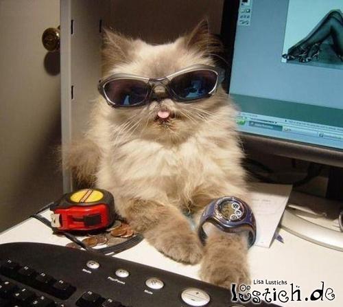 Coole Katze mit Sonnenbrille