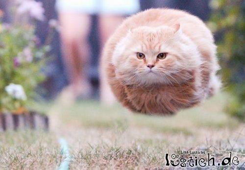 Fliegende Katzenkugel