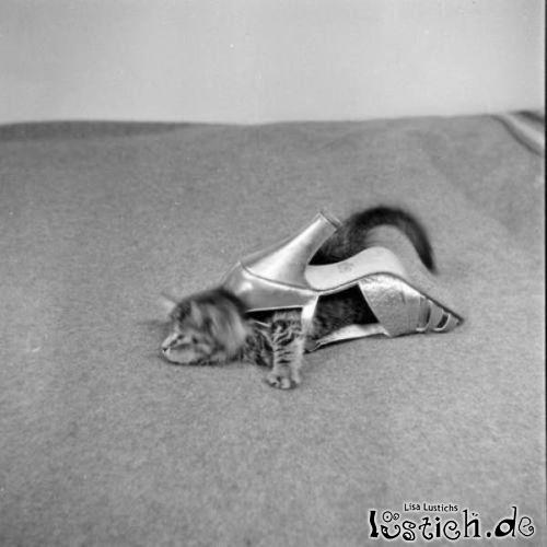 Katzen Schuh