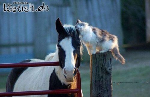 Katze und Pferd